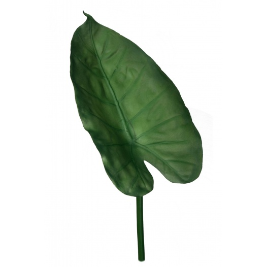 Folha Philodendron